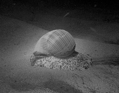 Có ai ngờ cái thân thể gầy gò kia lại bọc nổi tình thương yêu rộng lớn như con ốc nhỏ thu gọn cả đại dương trong lòng mà vẫn câm nín. Câm nín suốt đời…