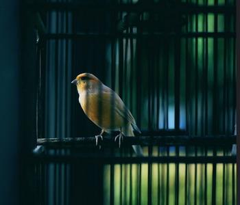 imprisoned bird